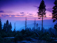 United States of America - Yosemite woods at dusk - Woods of Yosemite at dusk with overview of few mountains south of the park, nearby Wawona. - Yosemite National Park